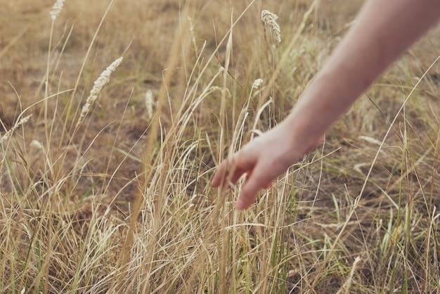 Женская рука трава поле растения свежий воздух