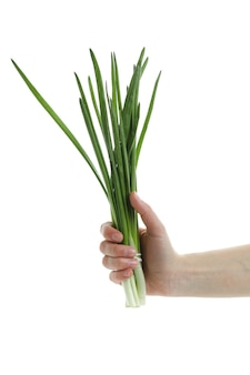 Female hand hold green onion, isolated on white