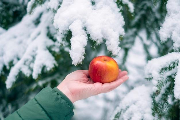 Женская рука держит красное яблоко на фоне зимнего леса в снегу