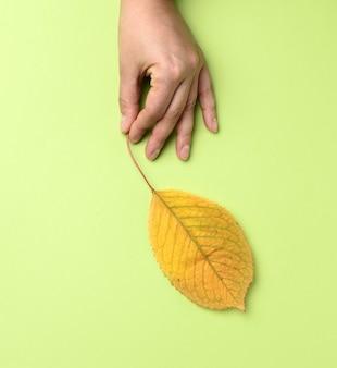 黄色い桜の葉を持っている女性の手