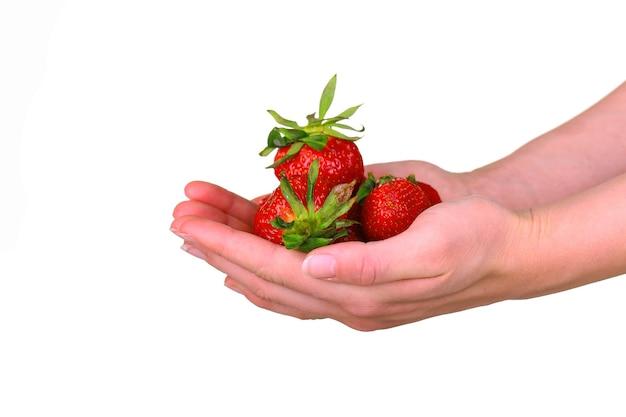 Female hand holding a fresh sweet strawberry isolated on white background. organic strawberries.