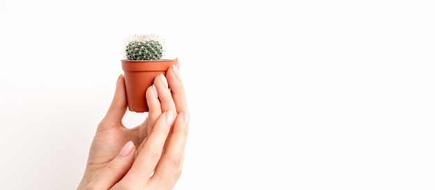 Female hand holding nice small green cactus in flower pot with copy space