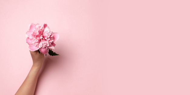 Женская рука держит розовый пион цветок пион