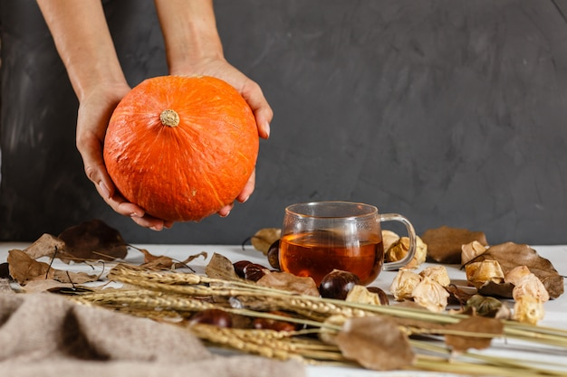 Female hand holding pumpkin, next lying chestnuts, cup of black tea, physalis, knitted sweater