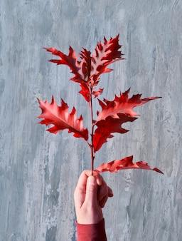 Женская рука держит веточку с яркими красными дубовыми листьями на текстурированной серой деревянной доске.