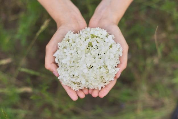 여성의 손을 잡고 흰색 수국 꽃, 상위 뷰. 꽃 선물, 휴일