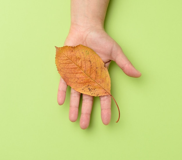 Female hand holding a yellow cherry leaf on a green background, close up