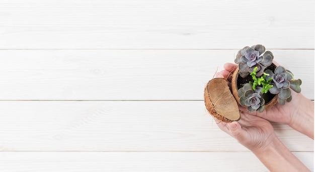 Женская рука держит растение в горшке с суккулентом на белой деревянной поверхности