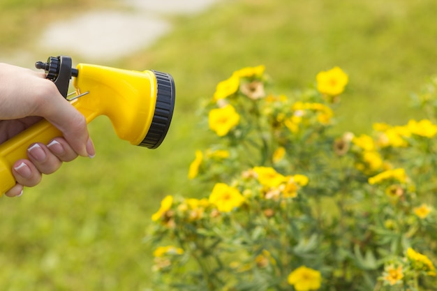 A female hand holds a sprayer for watering plants