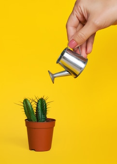 Female hand holds a watering can and waters a small decorative cactus in a pot.