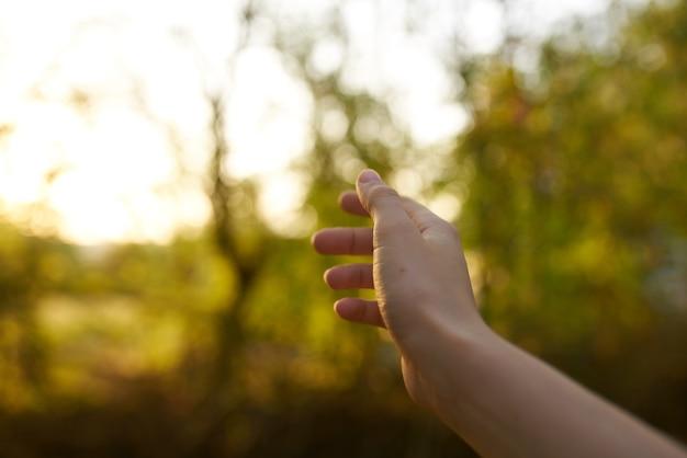 女性の手の自然夏の太陽の緑の葉。高品質の写真