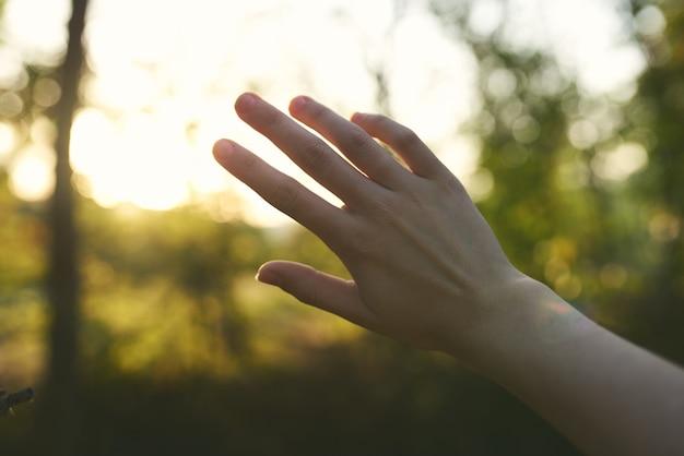 여성 손 자연 여름 태양 녹색 잎