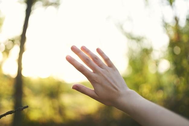 女性の手の自然太陽夏緑の葉