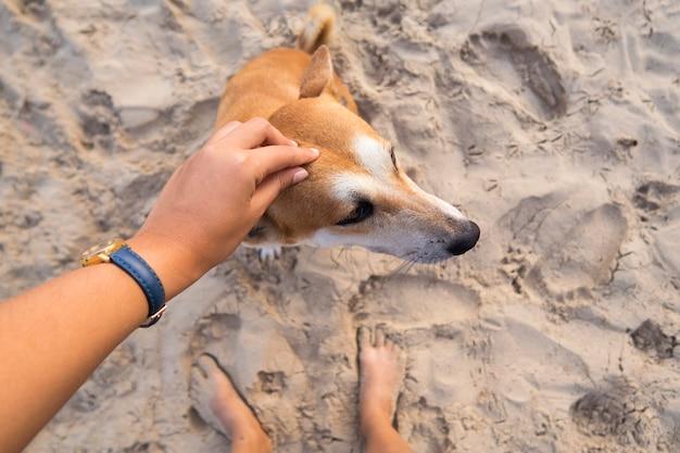 Female hand patting brown dog head at the beach.