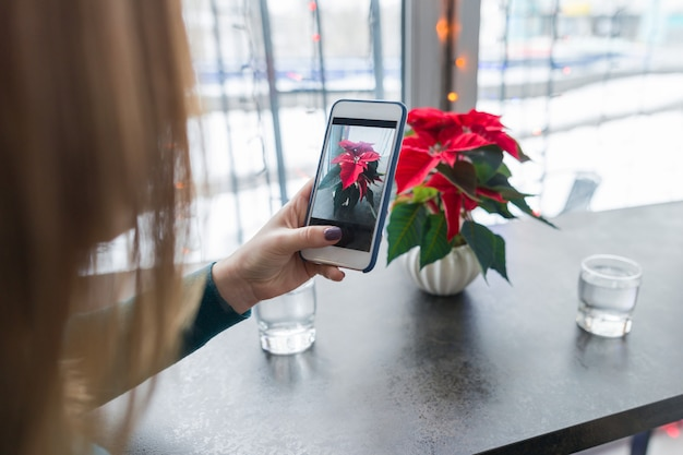 Female hand photographing christmas flower on smartphone