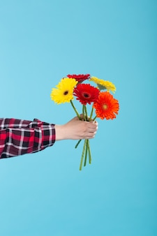 Female hand in a plaid shirt holding a bouquet of yellow red and orange gerbers on a blue wall. gift concept and greetings. promo space
