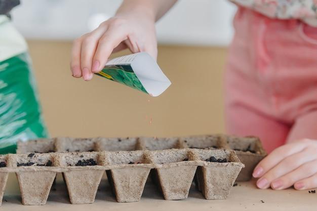 Женская рука, посадки семян в торфяных горшках. ранние сеянцы выращивают из семян в ящиках дома на подоконнике.