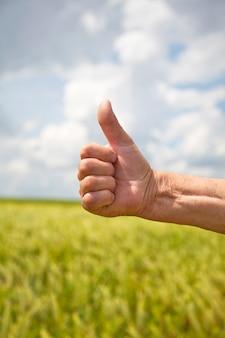 Female hand show ok symbol on wheat field