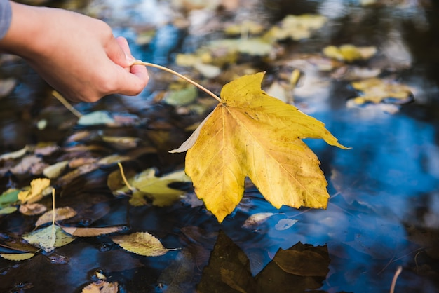 Female hand touches a fallen leaf in a puddle. focus on a leaf