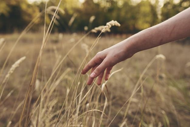 여성의 손은 들판 자연 근접 촬영에서 식물을 만집니다.