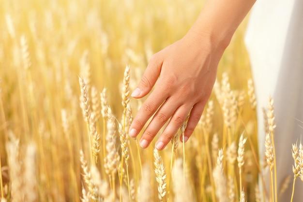 Female hand touching wheat ears