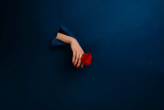 Female hand with a flower on a blue wall