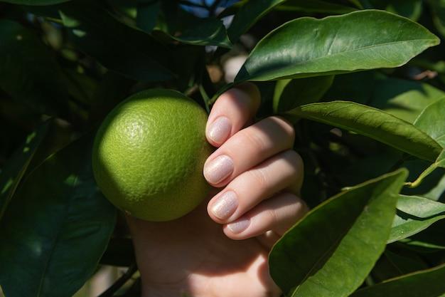 緑の葉を保持しているキラキラのネイルデザインの女性の手。