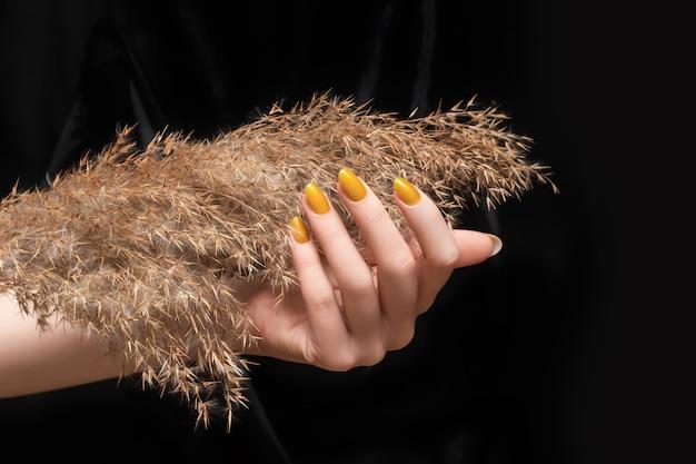 Женская рука с желтым дизайном ногтей. маникюр с блестящим желтым лаком для ногтей. рука женщины с сухим цветком тростника изолированным на черной предпосылке.