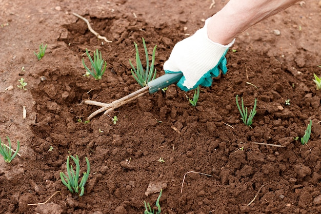 Female hand in a working glove loosening a bed of garden tools.