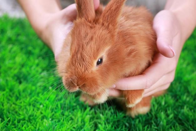 女性の手と緑の草の上のかわいい面白いウサギ