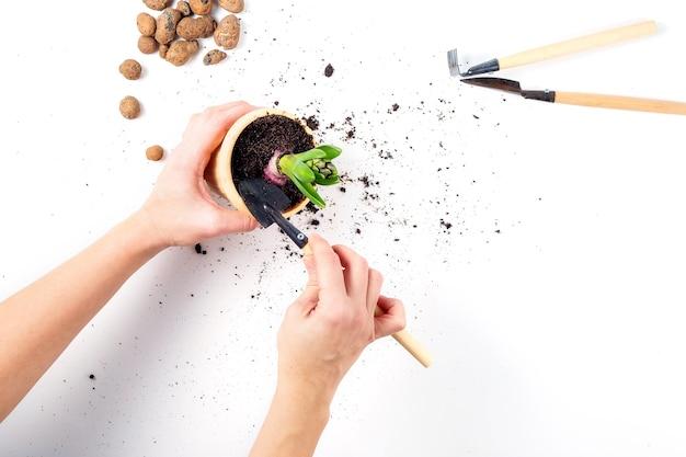 Женские руки держат горшок с растением в процессе пересадки садовых инструментов и керамзита