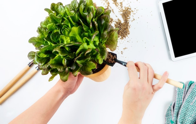 Женские руки держат горшок с растением в процессе пересадки садовых инструментов и перчаток