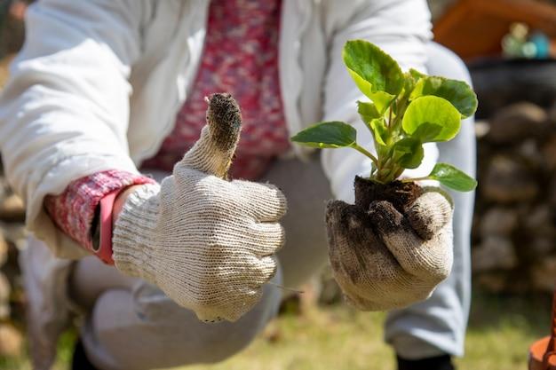 여성의 손은 꽃 새싹을 잡고 엄지손가락을 보여줍니다.
