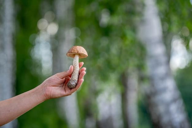森に集められたきのこを女性の手が握る。新鮮で美味しい。ぼやけた森の背景。