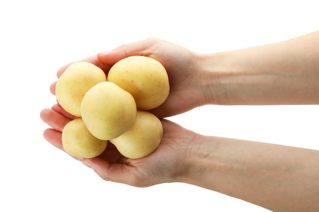 여성의 손을 잡고 젊은 감자, 흰색 절연