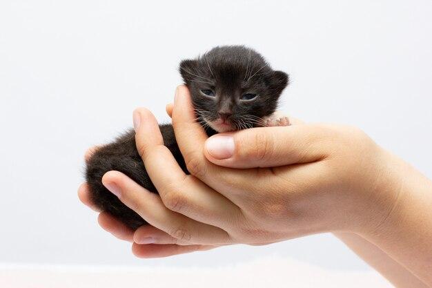黒い子猫を持っている女性の手