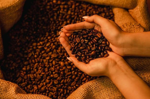 コーヒー黄麻布の袋の前で彼女の手でコーヒー豆を保持している女性の手