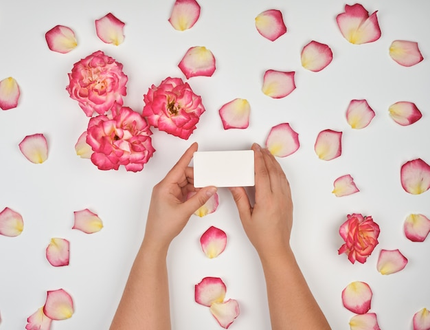 Female hands holding empty white paper cards and pink rose petals