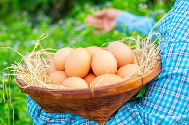 Female hands holding raw eggs in basket with straw in the garden.