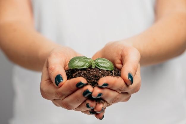 Mani femminili che tengono terreno e piccola pianta