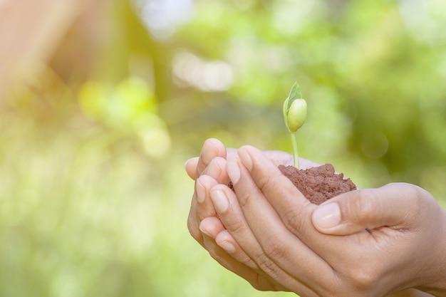 여자 손 잡고 나무 성장