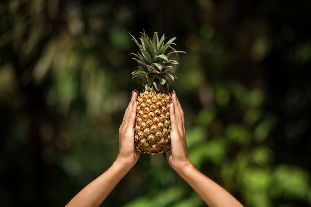 Female hands holds pineapple on green tropical jungle scene ,