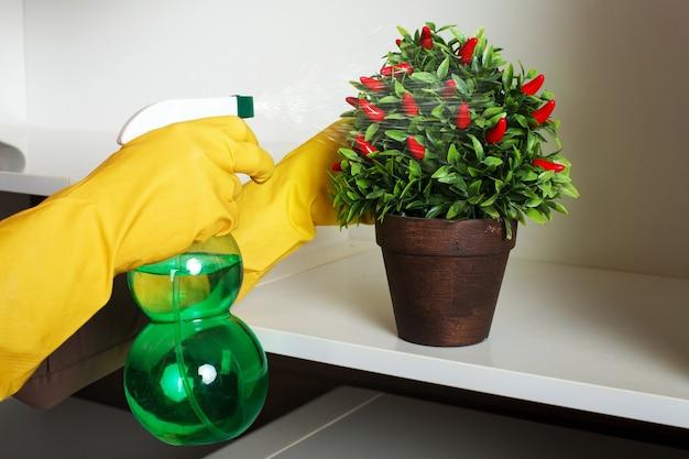 고무 장갑에 여성의 손을 스프레이로 꽃에 물을줍니다.