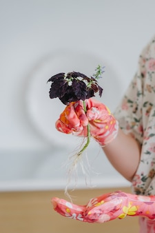 Female hands in pink gloves transplant home-grown flowers with roots.