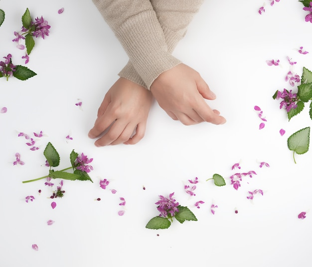 Female hands and pink small flowers on a white  background