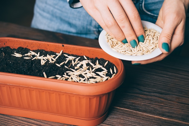 Female hands poured the seeds into the soil in a plastic pot for flowers