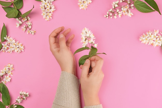 Female hands and  small white flowers on a pink background