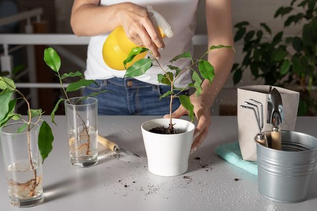 깨끗한 물로 여성 손 스프레이 houseplant