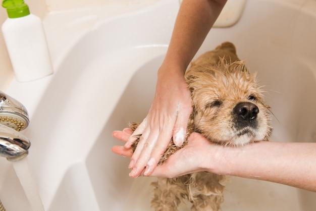 犬の耳を洗う女性の手