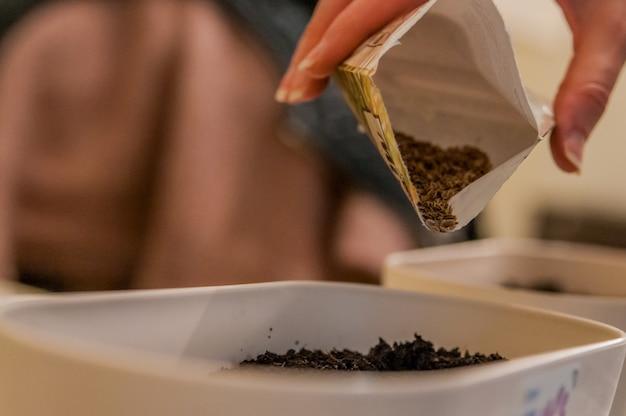 밝은 매니큐어 손으로 여성의 손은 식물 재배를 위해 냄비에 곡물과 토양을 파종하고 있습니다. 집에서 테이블에 지상에 씨앗을 파 종하는 여자. 여성 정원사는 그녀의 집에서 묘목을 뿌리다